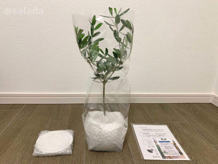 観葉植物 届いたもの
