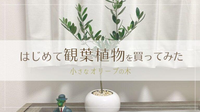 はじめて観葉植物を買ってみた