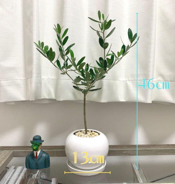 観葉植物 サイズ